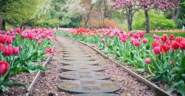 Astuces pour avoir un beau jardin